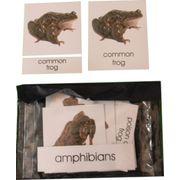 3 Part Nomenclature Cards: Amphibians