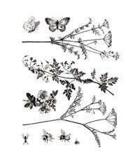 Flowers & Butterflies - Stamp