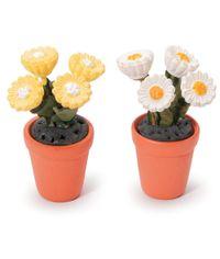Potted Daisies 1/Pkg - Assorted Colour Miniatures