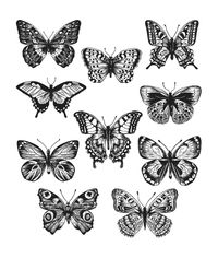 Flutter - Stamp