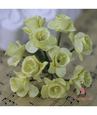 Daffodil Flower - Yellow