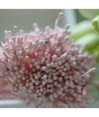 Pastel Thread Pollen - Baby Pink