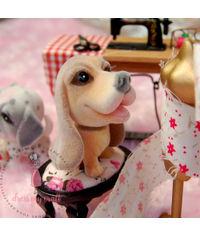 Miniature Dog  - Jimmy