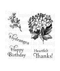 Graceful Hydrangea