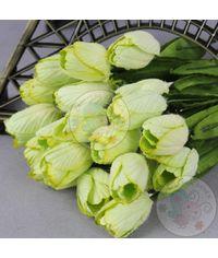 Light Green - Tulips