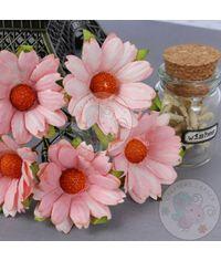 Gorgeous Peach - Mulberry Daisy Flower