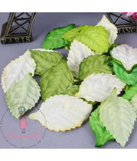 Green Mixed - Mulberry Leaves