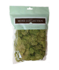 Spring Green-Preserved Reindeer Moss
