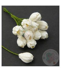White - Tulip Buds