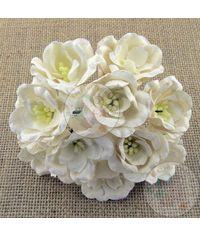 Poppy Rose - White/Cream