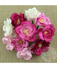 Poppy Rose - Pink Combo