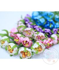 Pastel Anemone Flower