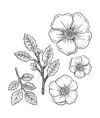 Christmas Rose - Stamp