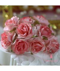 Wild Rose - Pretty Peach