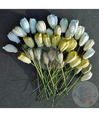 Green Tone - Tulip Buds Combo