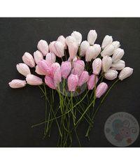Pink Tone - Tulip Buds Combo
