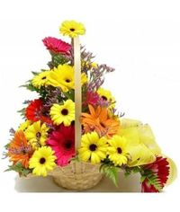 Basket of Gerberas