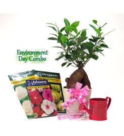 Exotic Green Environment Day Special 3 Year Old Grafted Ficus Bonsai Plant
