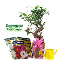 """Exotic Green Environment Day Special """"S"""" Shape Ficus Bonsai Plant"""