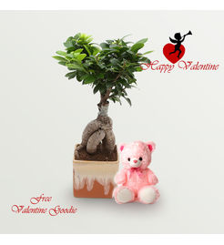 Exotic Green Valentine Special 3 Year Old Grafted Ficus Bonsai Plant