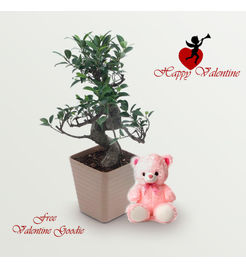 "Exotic Green Valentine Day Special ""S"" Shape Ficus Bonsai Plant"