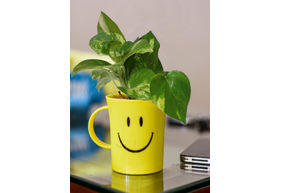 Good Luck Money Plant in Smiley Cup