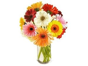Lovely Gerberas