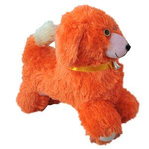 Cute Small Dog Teddy