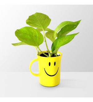 Good Luck Golden Pothos in Smiley Cup