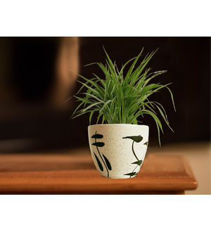 Air Purifying Spider Plant in Cream Aroez Ceramic Pot