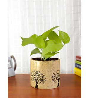 Air Purifying Good Luck Live Golden Money Plant GPCEBAAR-BR