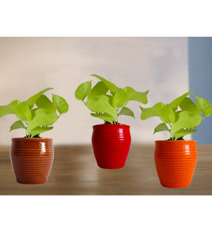 Combo of Good Luck Golden Pothos Plant in Red or Orange and Brown Iris Ceramic Pot