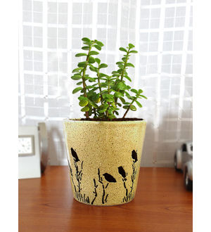 Rolling Nature Good Luck Jade Plant in Brown Bucket Aroez Ceramic Pot