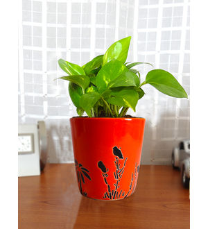 Good Luck Money Plant in Orange Bucket Aroez Ceramic Pot