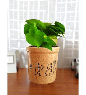 Good Luck Air Purifying Live Money Plant MPCEJRAR-BR