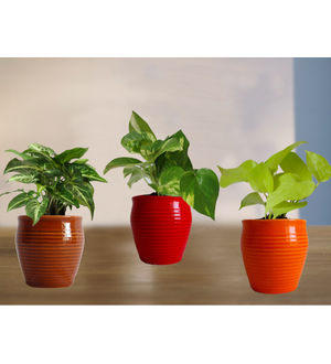 Combo of Good Luck Money Plant, Golden Pothos and Green Syngonium in Red, Orange and Brown Iris Ceramic Pot