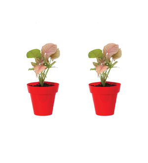 Rolling Nature Combo of Good Luck Syngonium Pink Plant in Small Red Colorista Pot Set of 2