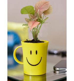 Good Luck Syngonium Pink in Smiley Cup