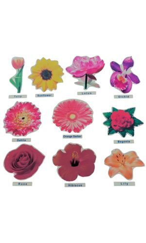 Flower Cut Outs Jumbo