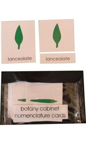 Botany Cabinet Shapes: 3 Part Nomenclature Cards