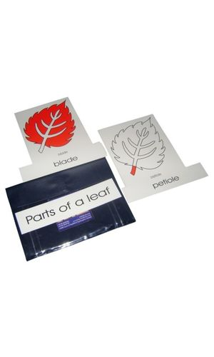Terminology Cards: Parts of leaf