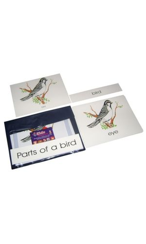 Terminology Cards: Parts of bird
