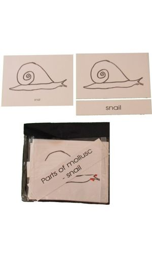 Terminology Card: Parts of Snail