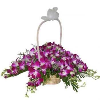 Orchids Royale