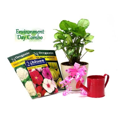 Exotic Green Environment Day Special Indoor Plant Hybrid Syngonium