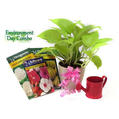 Exotic Green Environment Day Special Air Purifier Indoor Plant Golden Pothose