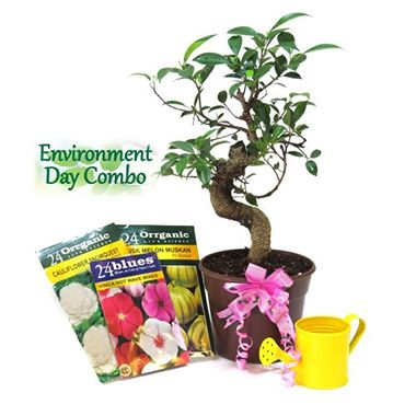 "Exotic Green Environment Day Special ""S"" Shape Ficus Bonsai Plant"