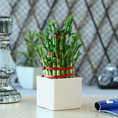 Exotic Green Feng Shui 3 Layer Bamboo Plant