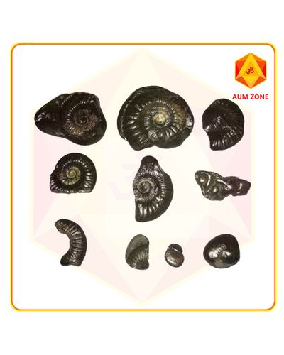 Dashavtar Shaligram Set