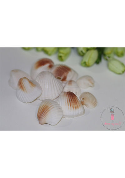 Natural Sea Shells 3